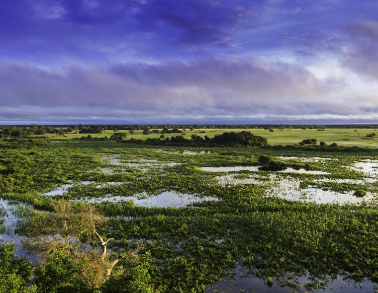 Picture of the Pantanal from Wikimedia Commons