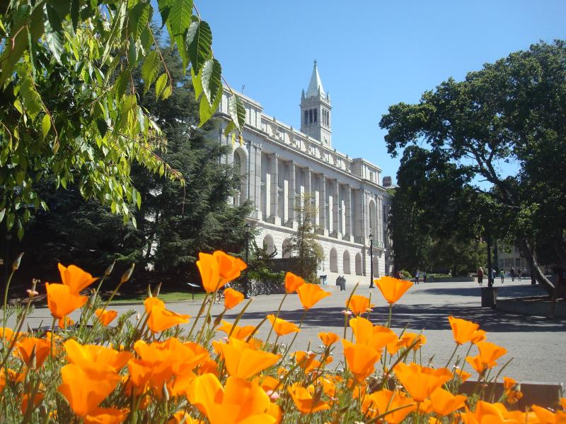 poppies in foreground of Wheeler Hall