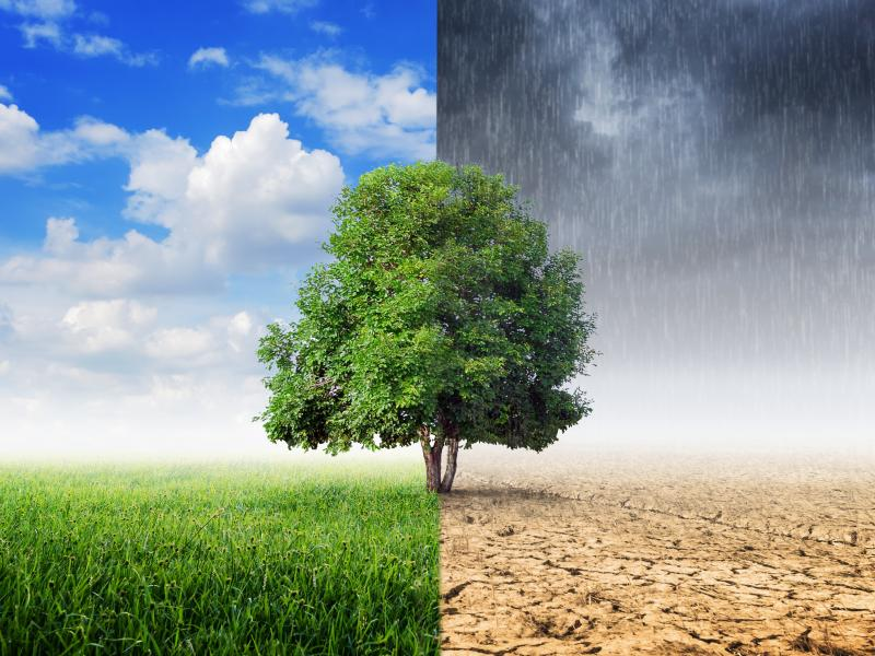composite image of effects of climate change